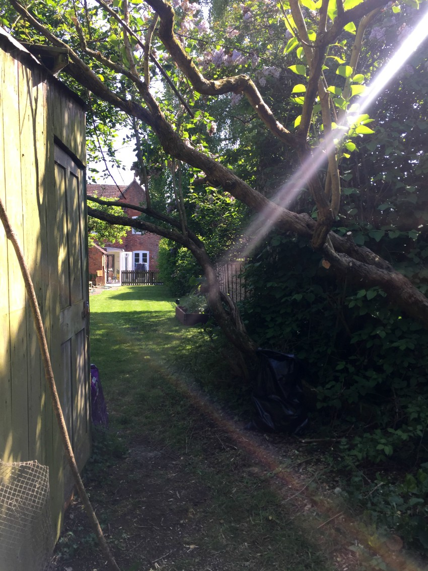Thebeautytype rennovation update gardening blogging lifestyle northampton blogger